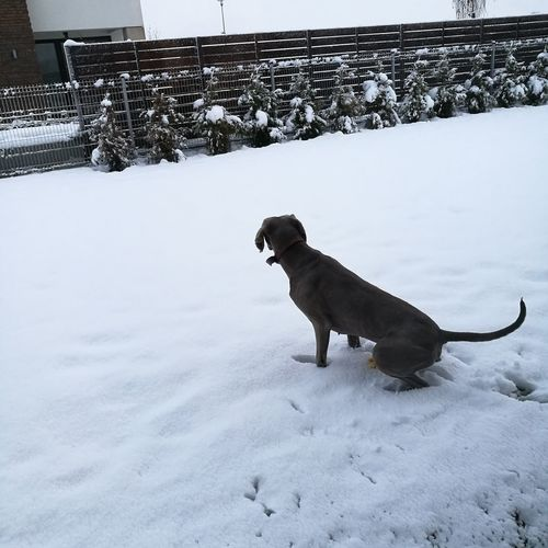 Jeco thinking what will do , how to play in snow , feeling cold ..
