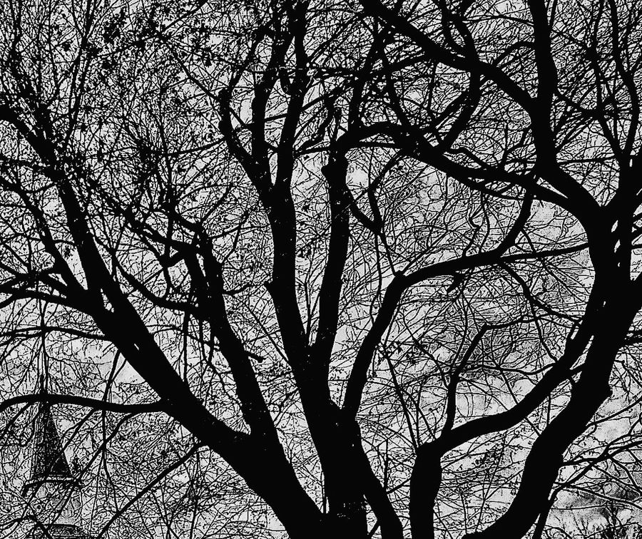 Tree No People Sky Branch Growth Backgrounds Day Chapel Storm Approaching Welcome To Black Through Window Lexington Kentucky  Art Is Everywhere Cut And Paste Break The Mold BYOPaper! Place Of Heart Mix Yourself A Good Time The Week On EyeEm Perspectives On Nature Rethink Things Black And White Friday Be. Ready.