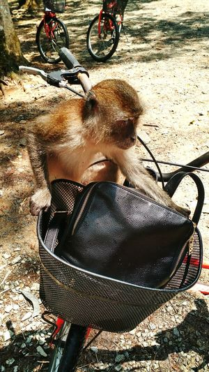 Because I love monkeys🐒💗 Monkey Smart Bag BookBag Opening Bike Bicycle Trail Singapore Palau Ubin, Singapore Love Cute Stealing Food Dont Steal My Food