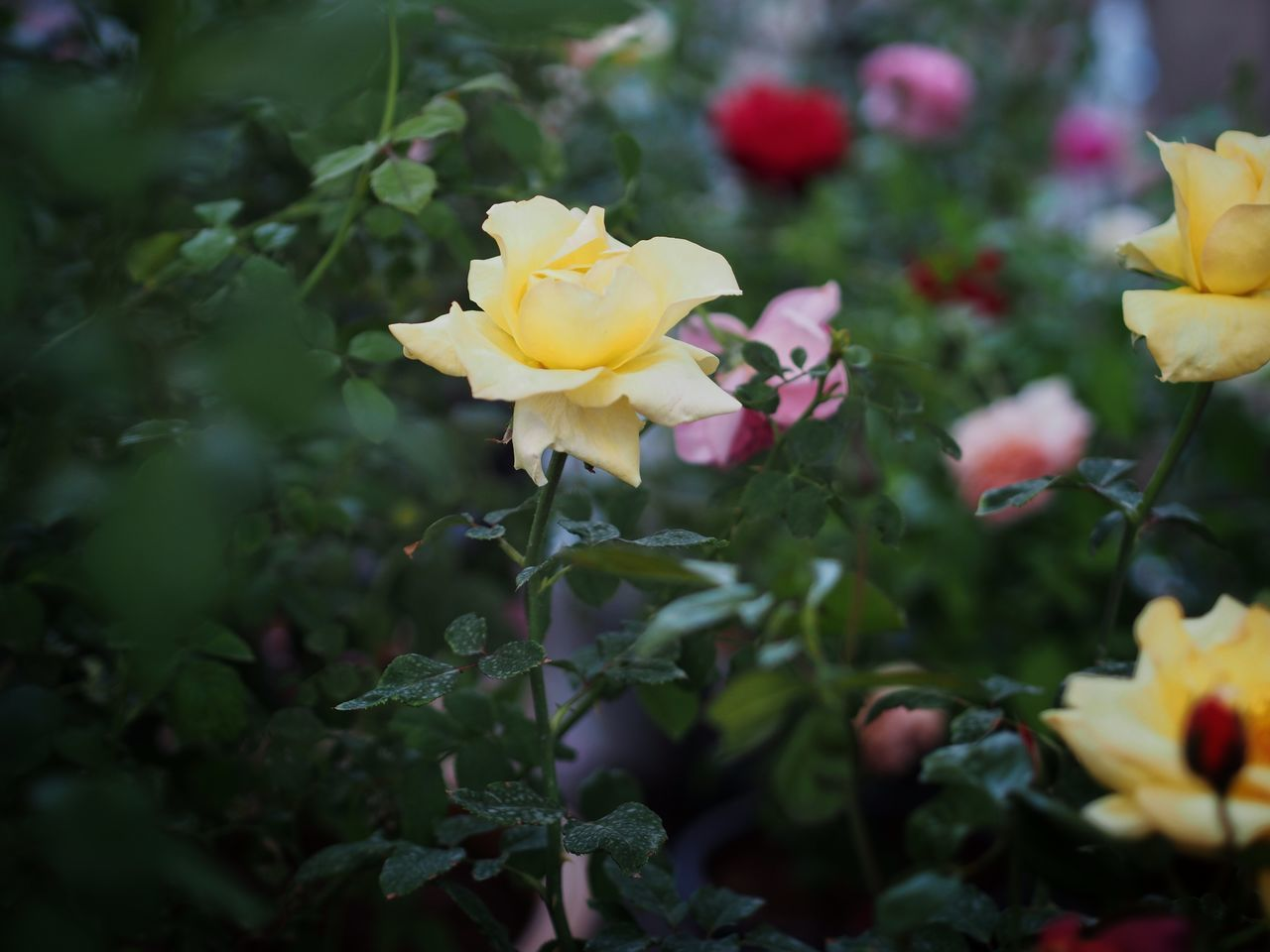 flower, petal, fragility, beauty in nature, flower head, nature, growth, yellow, freshness, plant, blooming, no people, day, outdoors, leaf, close-up