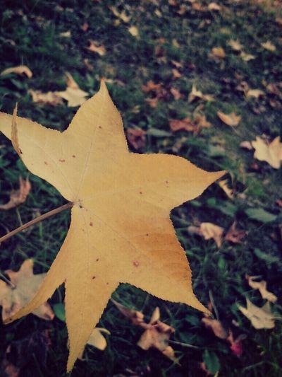 I found a star
