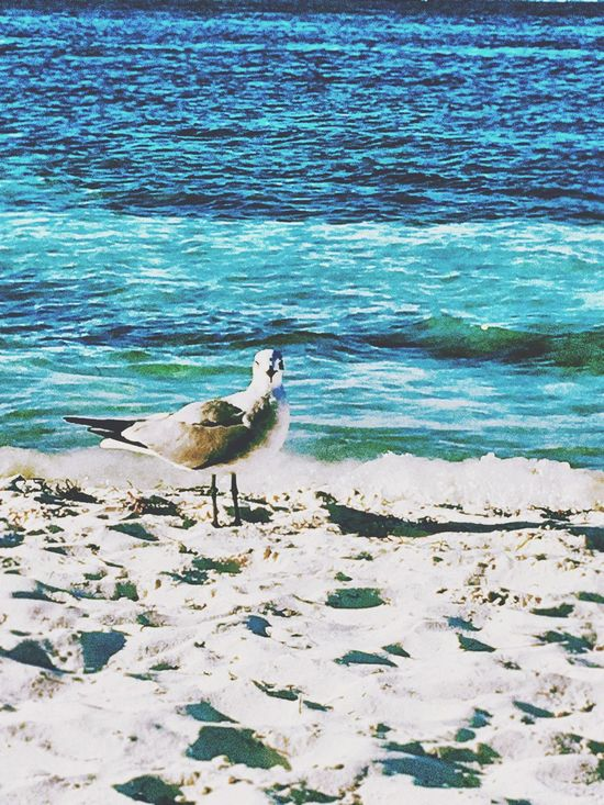 Bird Photography Birds_collection Birds Of EyeEm  Waves, Ocean, Nature Beach Photography Animals In The Wild Beach Outdoors Sand Oceanviews🌊 Sunshine ☀ Travel Photography Looking At Camera Viewpoint Sky_collection Ocean Photography Waves