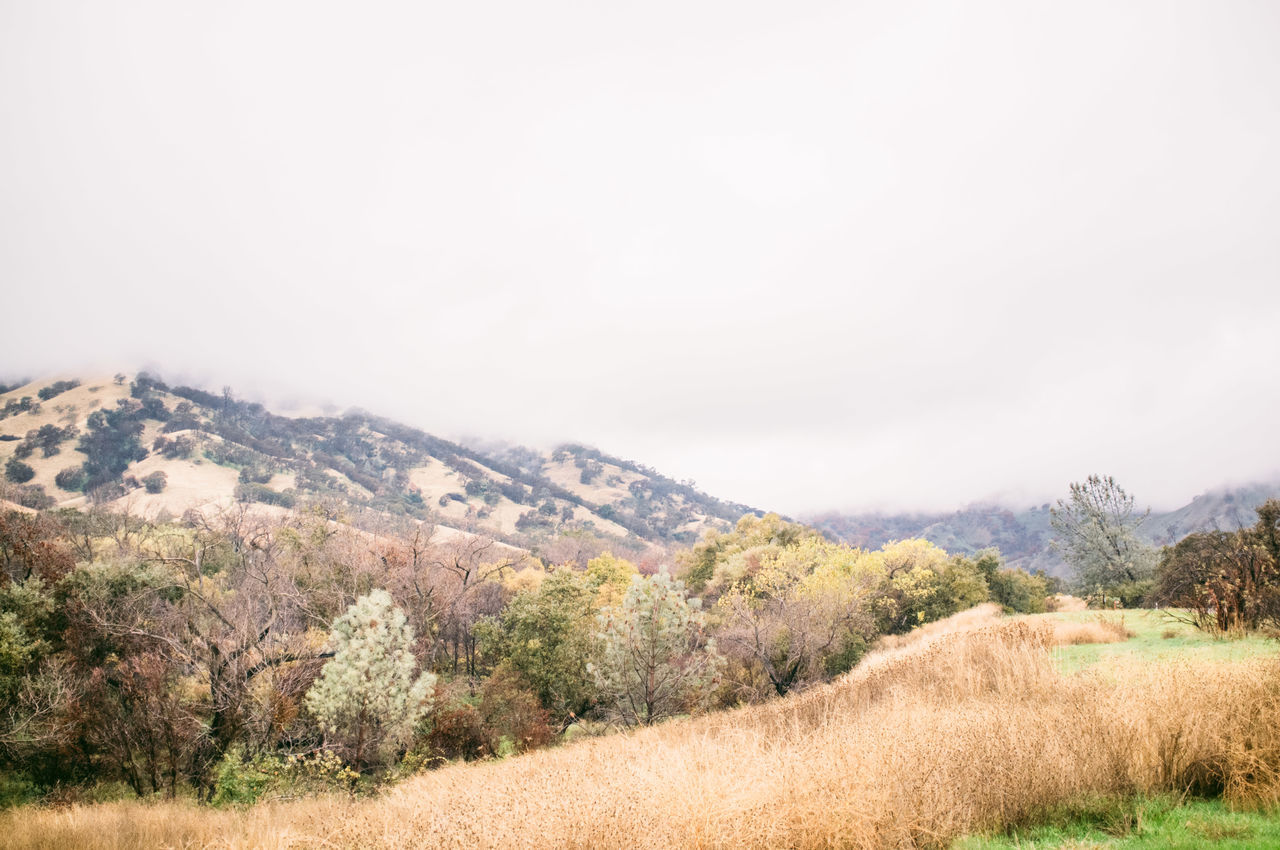 Beauty In Nature Day Landscape Mountain Napa Valley Nature No People Outdoors Scenics Sky Tranquil Scene Tranquility Tree