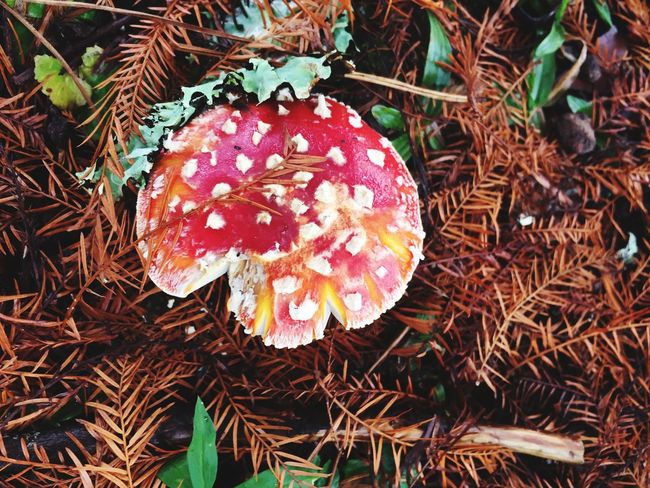 Camposdojordao Cogumelos Sao Paulo - Brazil Nature Photography Cold