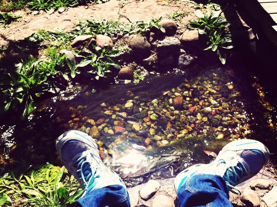 From Where I Stand Lunchtime! Brisando Jardim Japonês