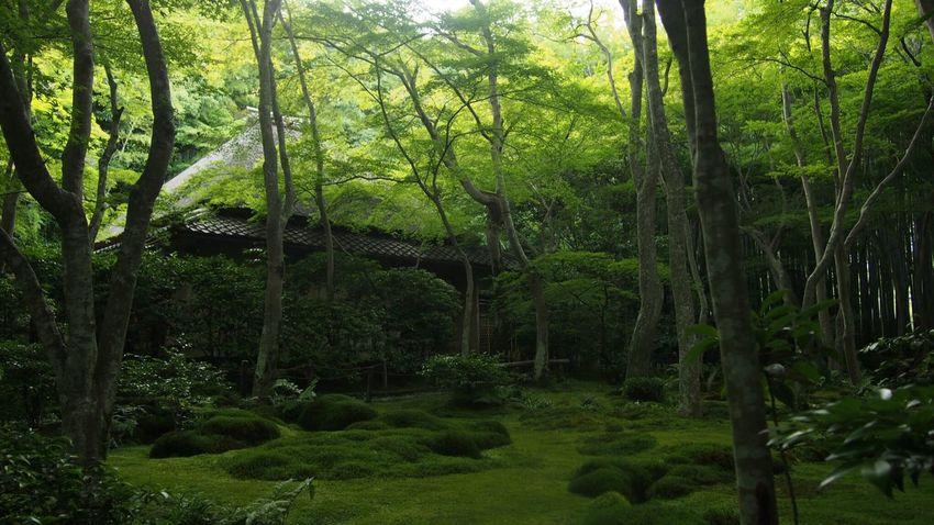 祇王寺。 Beautiful Nature EyeEm Nature Lover EyeEm Best Shots Japan,koyto Green Nature Talking Photos Japanese Temple Japanese Garden