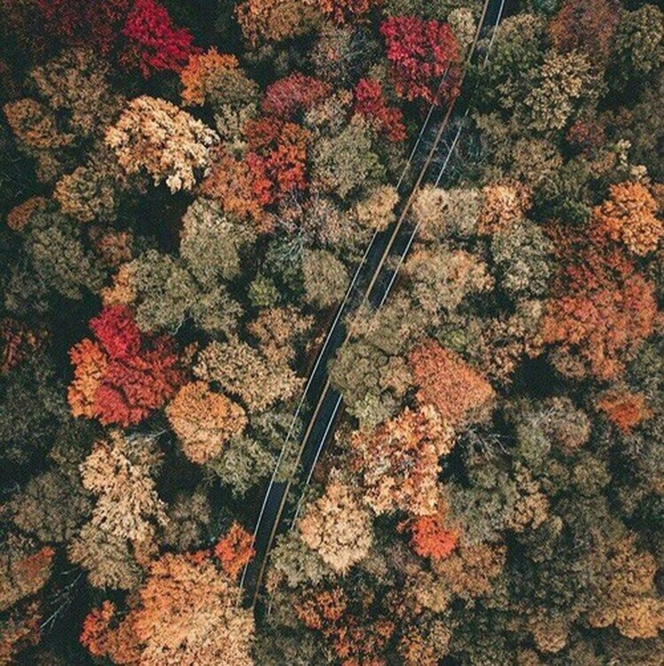 Autumn 🍁 Fall Colors No People