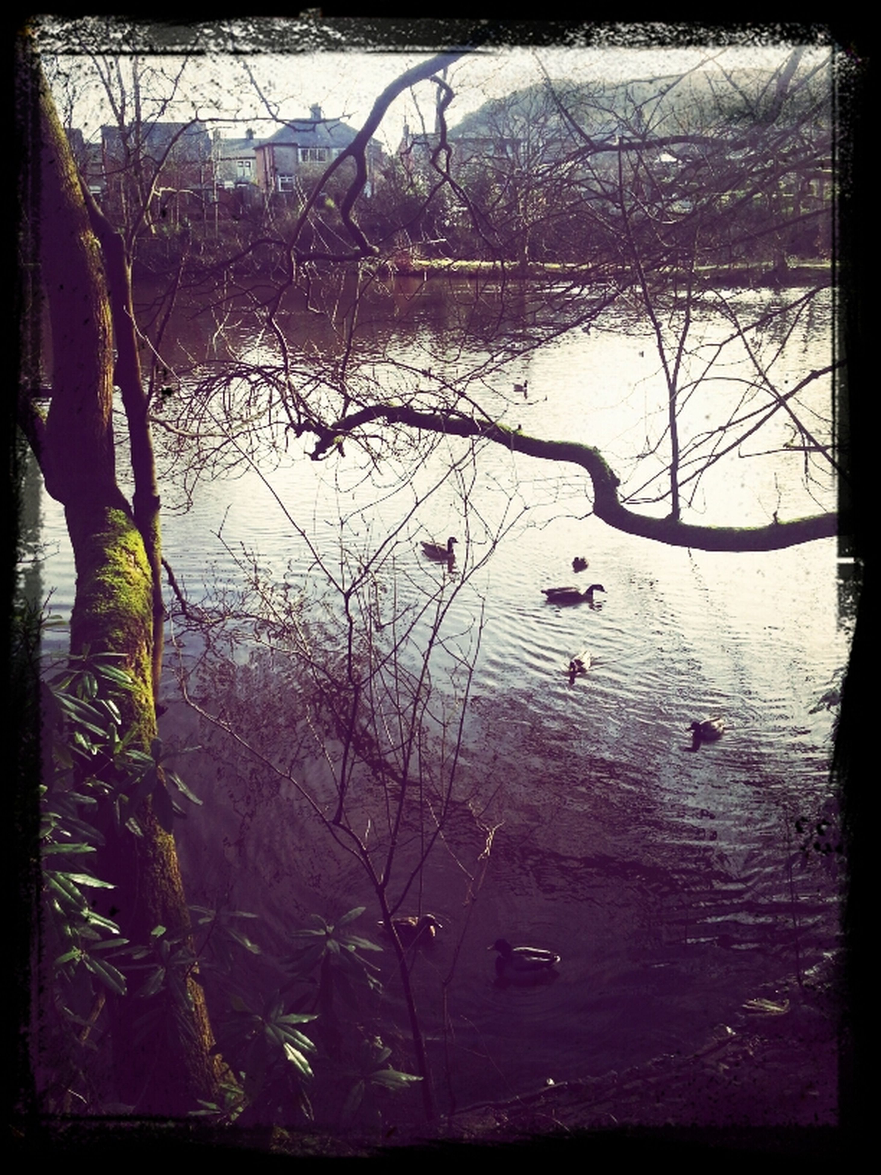 water, transfer print, lake, auto post production filter, reflection, tranquility, tree, branch, nature, tranquil scene, waterfront, beauty in nature, scenics, bare tree, rippled, day, river, outdoors, floating on water, lakeshore