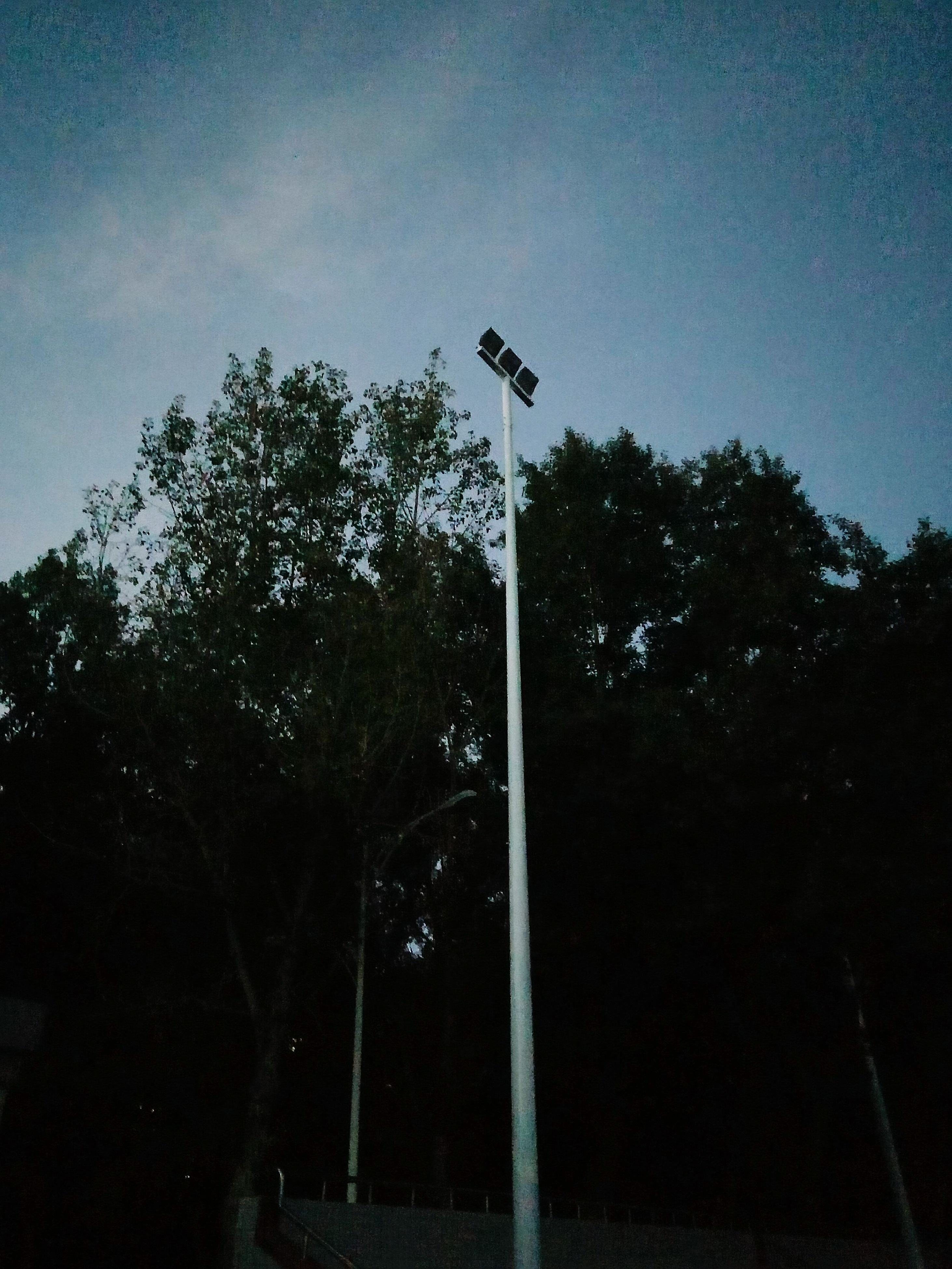 tree, low angle view, silhouette, animal themes, street light, sky, bird, one animal, wildlife, growth, animals in the wild, nature, branch, outdoors, lighting equipment, clear sky, no people, day, sunlight, blue