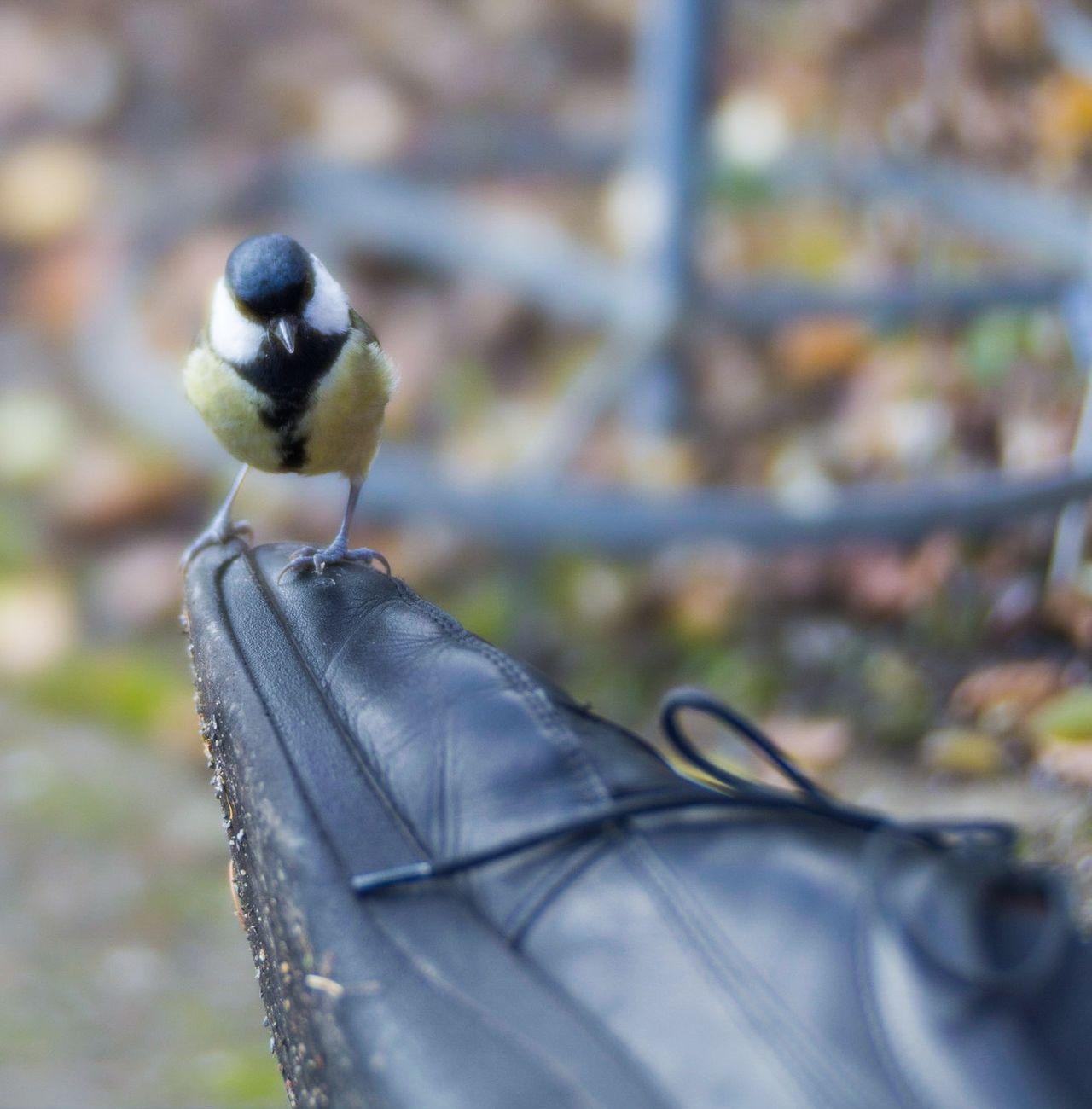 Meise auf Schuh Birdview Bird_on_shoe Neugierige Meise Titmouse Botanical Garden Dresden Botanical Garden