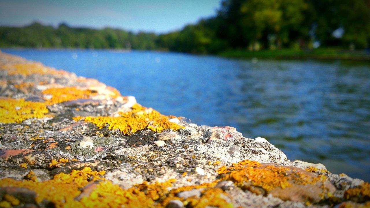 River Riverbank Riverside Water Trees Macro Rock Moss Summer Focus Foreground