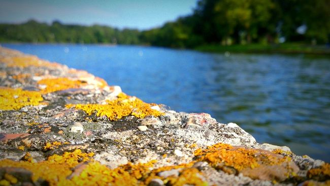 River Riverbank Riverside Water Trees Macro Rock Moss Summer Focus Foreground