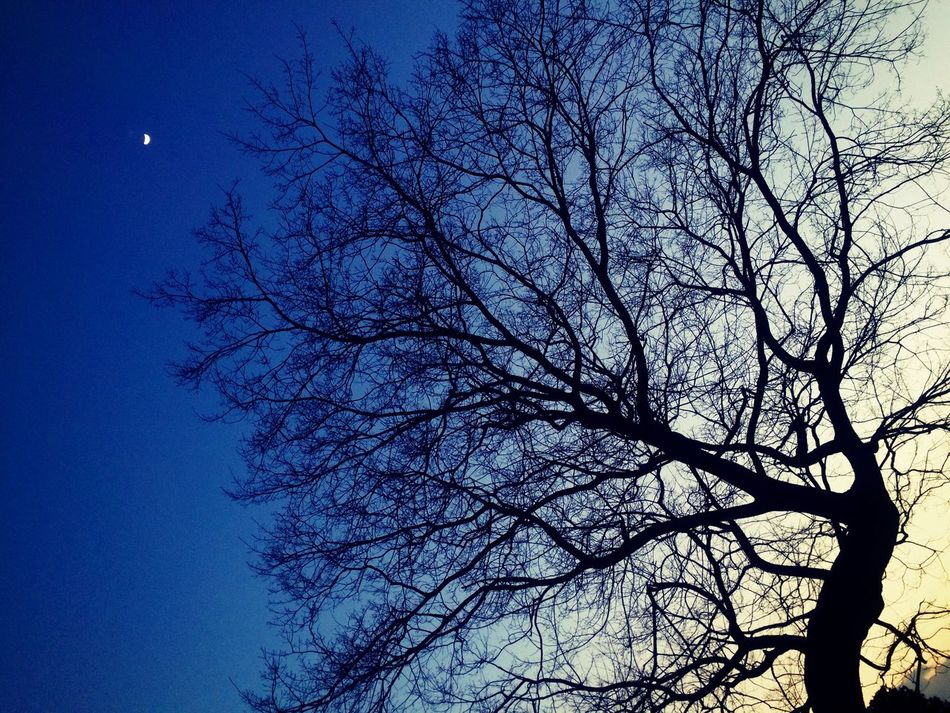 Tree Bare Tree Branch Low Angle View Silhouette Sky Blue EyeEm Gallery Iphonegallery Beauty In Nature Clear Sky Scenics Moon No People Tranquility Outdoors Tranquil Scene Treetop Night Japan Japanese  https://youtu.be/dig3SRsG4ac