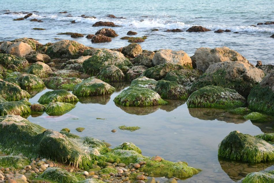 Water Nature Rock - Object Growth Sea Outdoors No People Day Beauty In Nature Cactus Illuminated Light And Shadow EyeEmNewHere Beach From My Point Of View Waves Tranquil Scene Pollution Reflection Agrigento