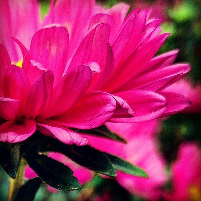 Supersnap Photocreditsme ! Lovelyflower