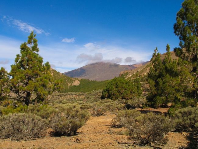 Tree Tranquil Scene Mountain Tranquility Scenics Landscape Sky Beauty In Nature Nature Non-urban Scene Solitude Tenerife Tenerife Island Teneriffa Beauty In Nature Blue Travel Destinations Growth Mountain Range Outdoors Cloud - Sky Remote Day
