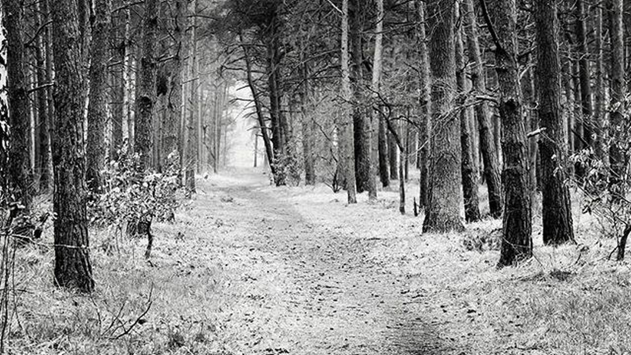 Natur Photograph Photooftheday Wunderschön Schwarzweiß Blackandwhite Monochrom Wald Woods Photo Zielitz Bäume Nature Natural