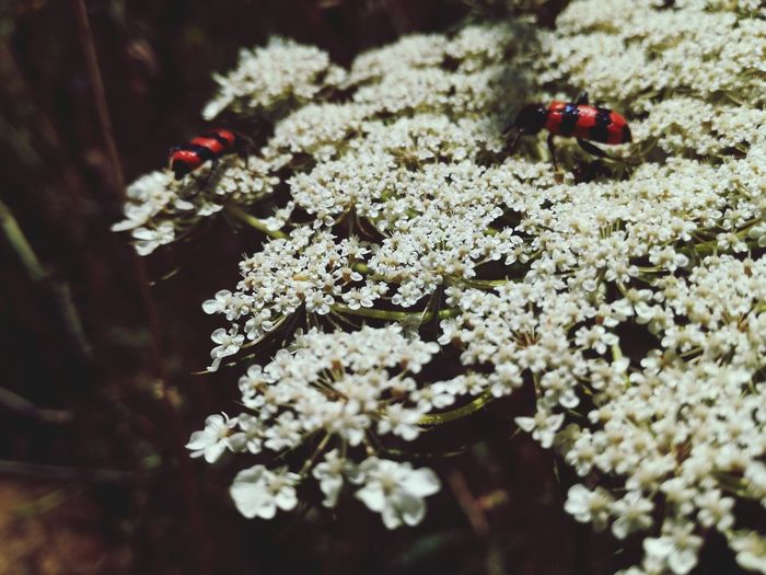 Animal Themes One Animal Animals In The Wild Insect Animal Wildlife Nature No People Close-up Outdoors Day Green Color Bugsandflowers Beauty In Nature ❤️❤️ Beautiful Nature Sunny Day☀ Beauty In Nature