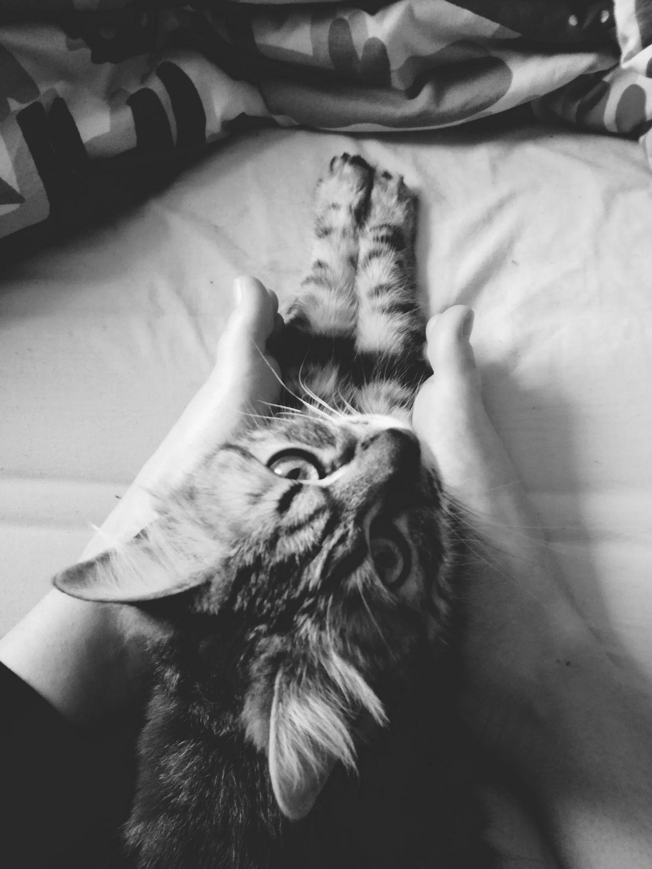 Occhioni Dolci Cats 🐱 Minerva Amoredellamiavita Amoredellamamma Tiamo🌸