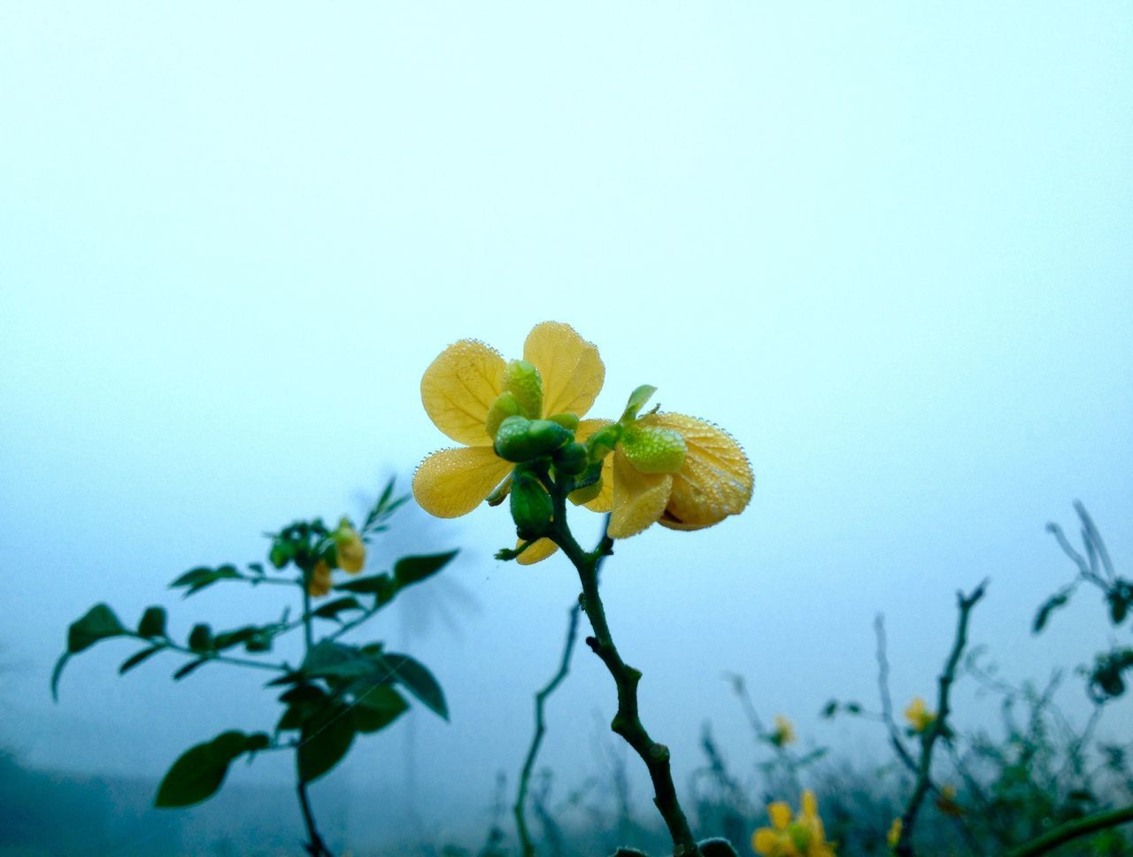 Flowers Yellow Flower Green Color Green Fog Foggy IPhoneography Iphoneonly IPhone Iphonephotography Ipgonegraphy Iphonesia IPhone Photography Mobilephotography Mobile Photography Mobilephoto