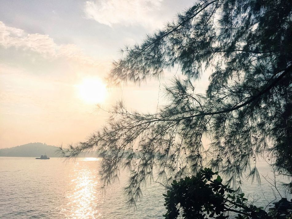 Tree Beauty In Nature Nature Water Sky Scenics No People Tranquility Tranquil Scene Outdoors Branch Sea Day Nature Lover Sunrise Sunlight And Shadow Freshness Morning Light Morning Sky Morning View Coney Island Pine Trees Pine Trees By The Beach Pine Trees Against The Sky