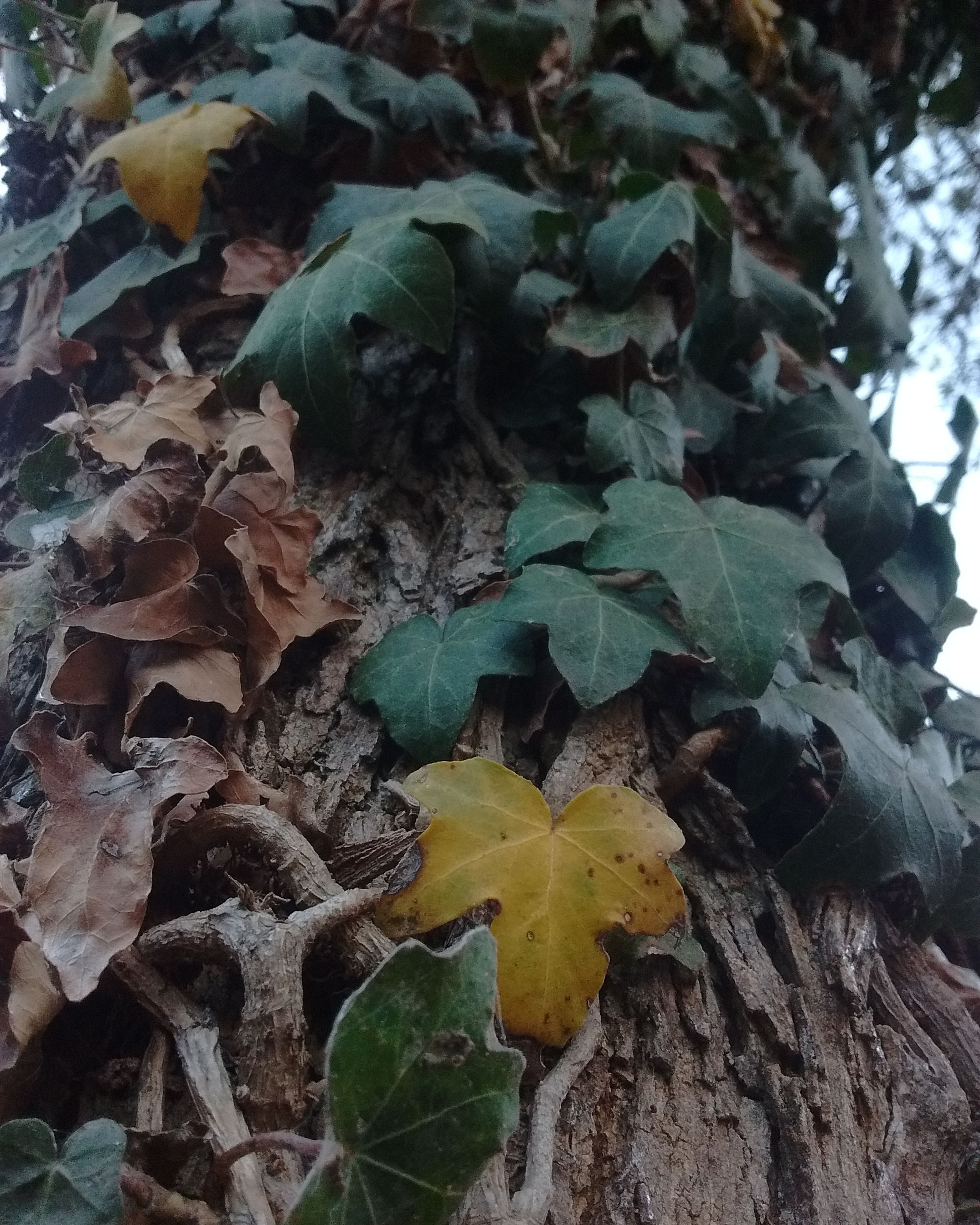 leaf, growth, fragility, nature, no people, close-up, day, plant, green color, beauty in nature, outdoors, fungus, tree trunk, tree, freshness, toadstool
