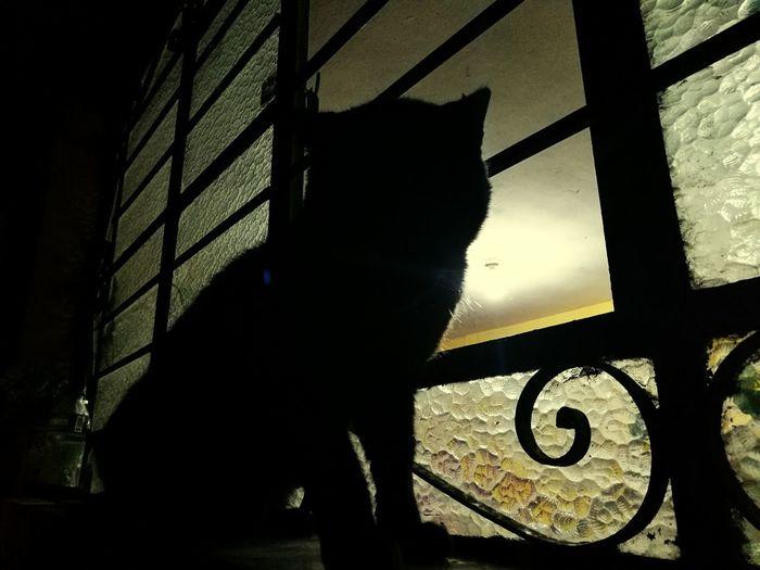 Migatomodelo ElMushu Darkness And Light Gato Cats Cat