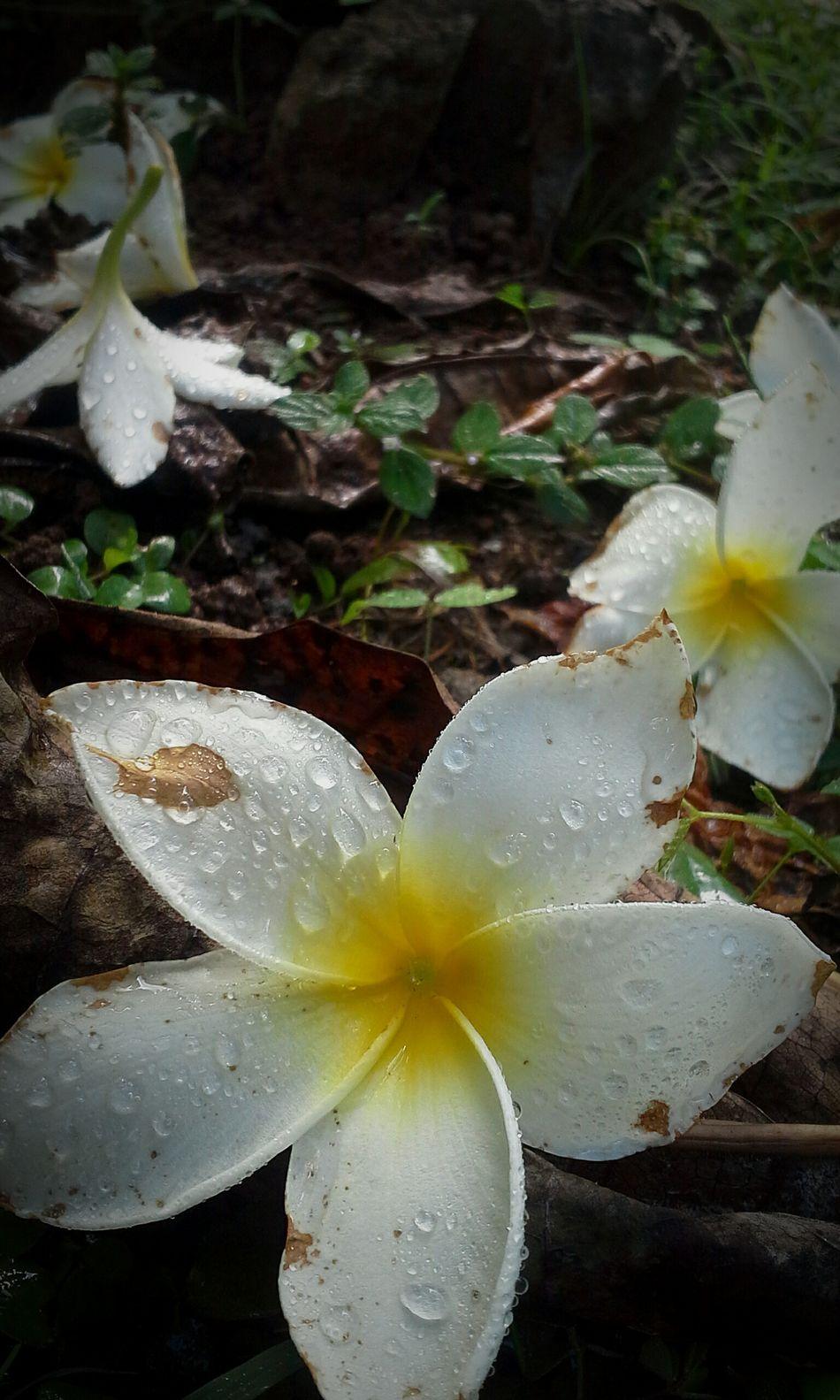 First Eyeem Photo Enjoying My World In My Backyard Flowerporn 😍😘🌺🌿