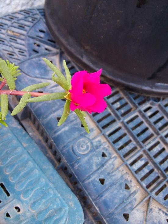 Original Photography Flower Mediterranean Flowers