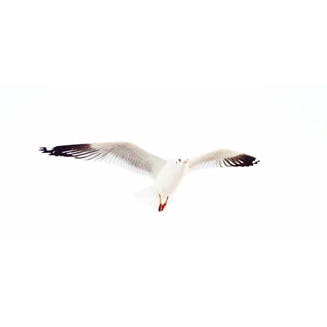 Day 7 Free as a bird Location - Ferry ride from Elephanta Caves, Mumbai, India IndiaJourney Bird Free Freedom India Vscocam VSCO Vscobirds India Birds White Ferryride Vscotravel Vscoexplore Fly Sky High Flying Flyingbird