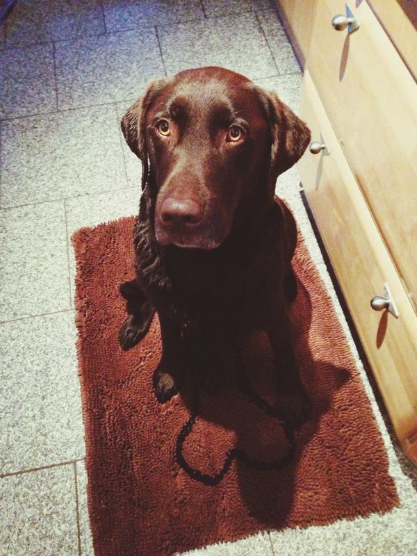 Eiko had to take a bath Eiko Dog Labrador Wet
