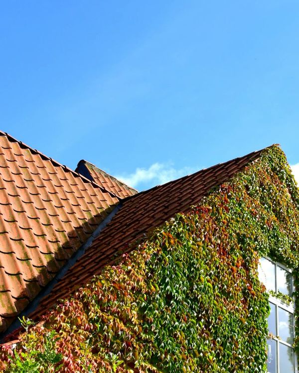 House in Femmøller Strand Covered with Ivy Tiled Roof  Roof Adapted To The City