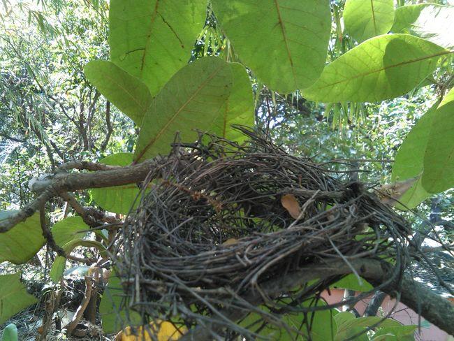 Birds Nest Absence Empty Tree
