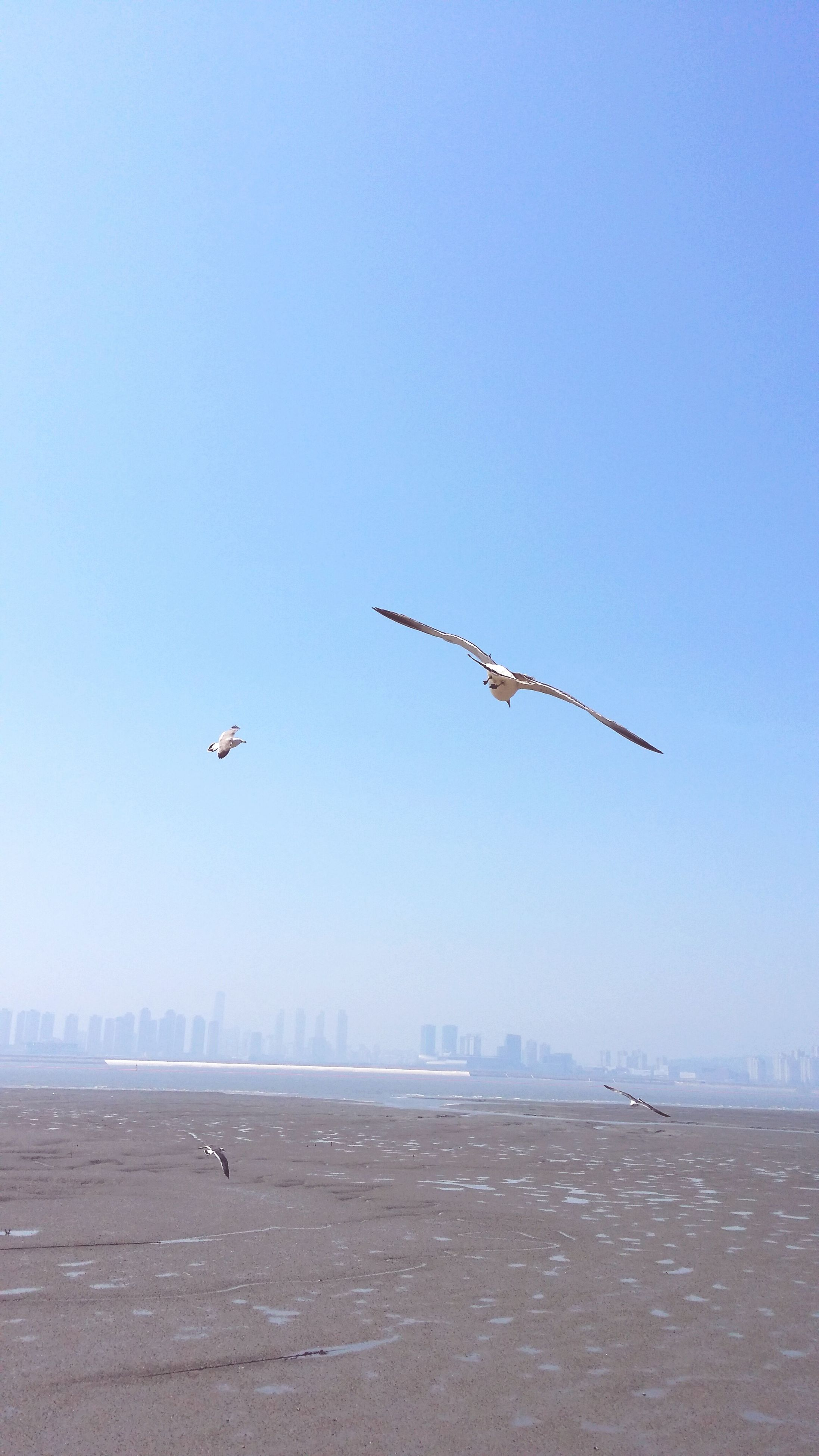 flying, transportation, airplane, air vehicle, mid-air, mode of transport, clear sky, on the move, copy space, public transportation, bird, travel, flight, journey, blue, motion, spread wings, airways, animals in the wild, helicopter