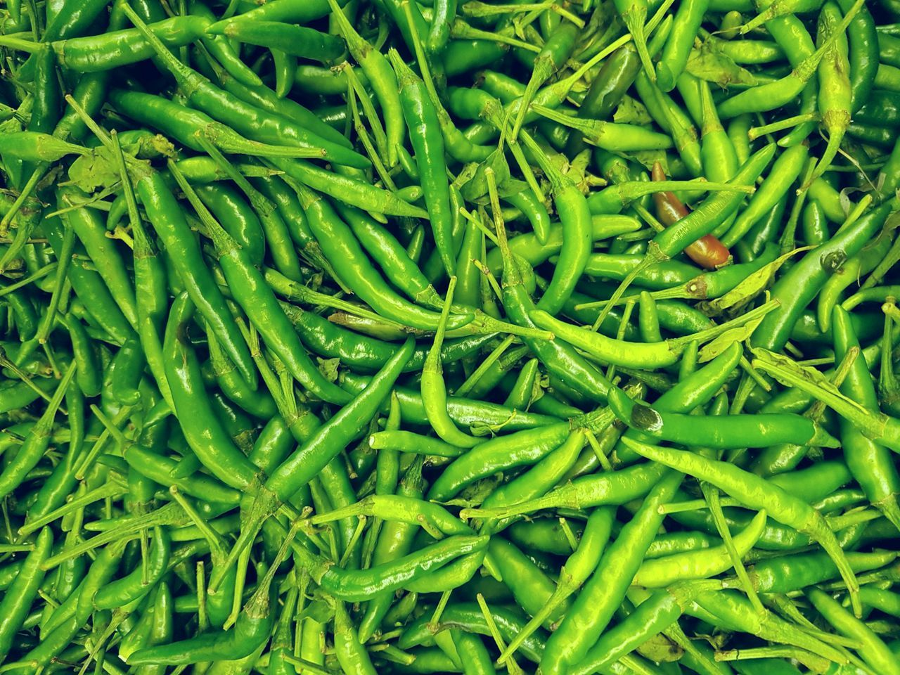 Green Color Backgrounds Full Frame Plant Nature Growth Close-up Freshness Agricultural Agronomy Agriculture Organic Market Plants Still Life Large Group Of Objects Abundance Chillies Chilly