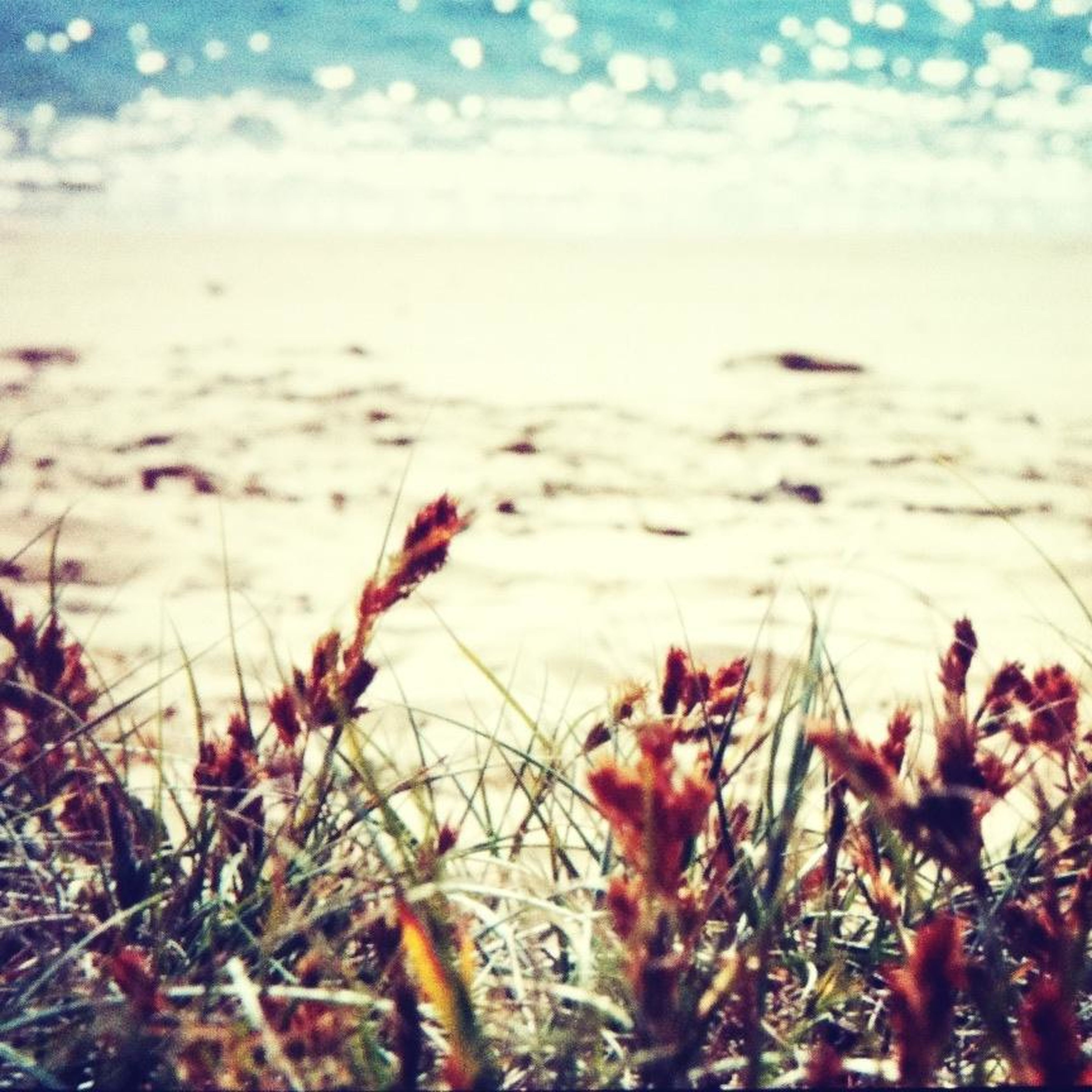 beauty in nature, flower, sea, plant, growth, nature, sky, water, tranquility, focus on foreground, horizon over water, beach, close-up, freshness, tranquil scene, scenics, fragility, growing, cloud - sky, selective focus