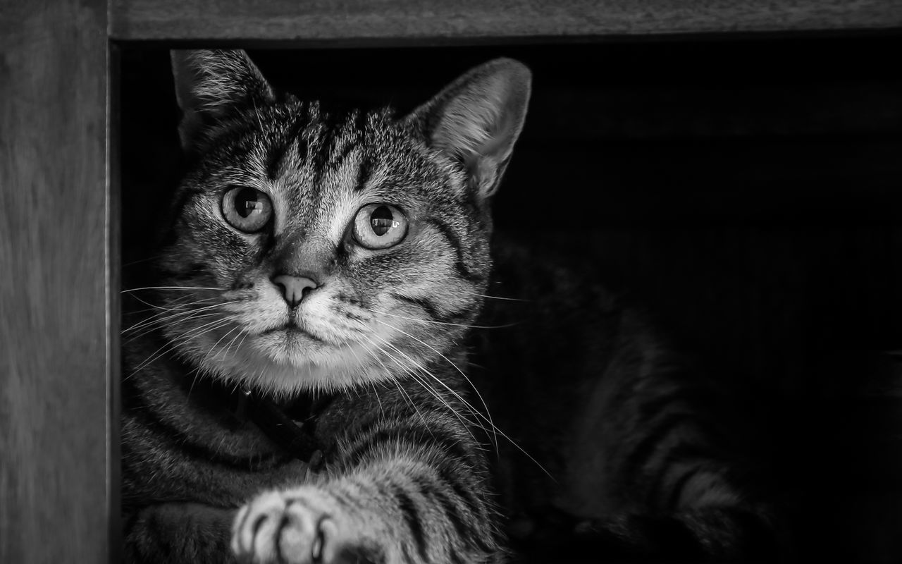 Alertness Animal Eye Animal Head  Animal Themes Blackandwhite Cat Cats Cats Of EyeEm Curiosity Domestic Animals Domestic Cat Eyes Feline Greeneyes :) Home Looking At Camera Mammal One Animal Pets Portrait Relaxation Relaxing Schrödinger Schrödingers Cat Whisker