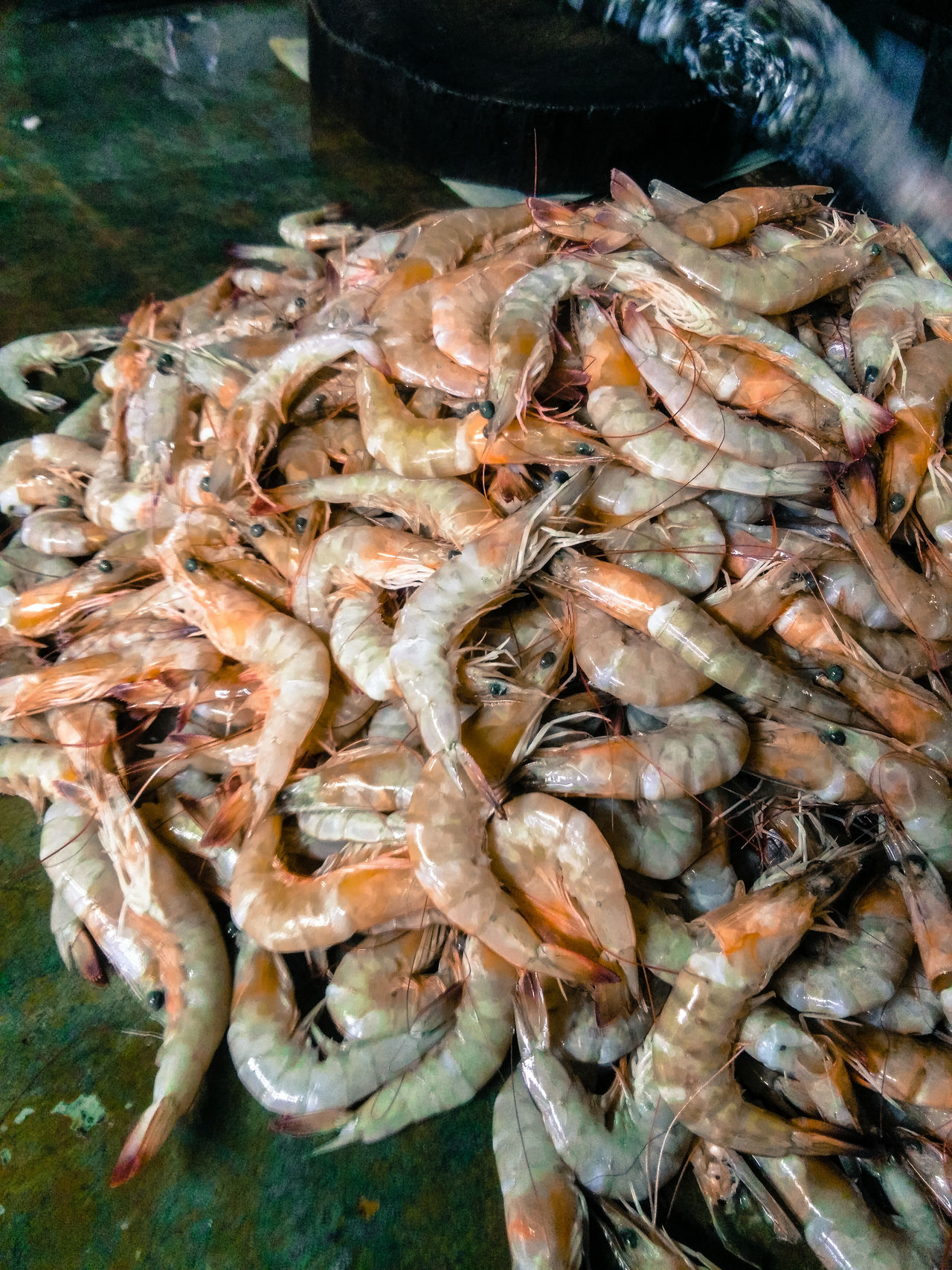 Caribbean shrimp Shrimp! Foodmarket Marketplace Freshcatch Market Shrimps! 🍝 Shrimping Fisherman Caribbean Trinidad And Tobago SEAFOOD🐡 Seafood Market