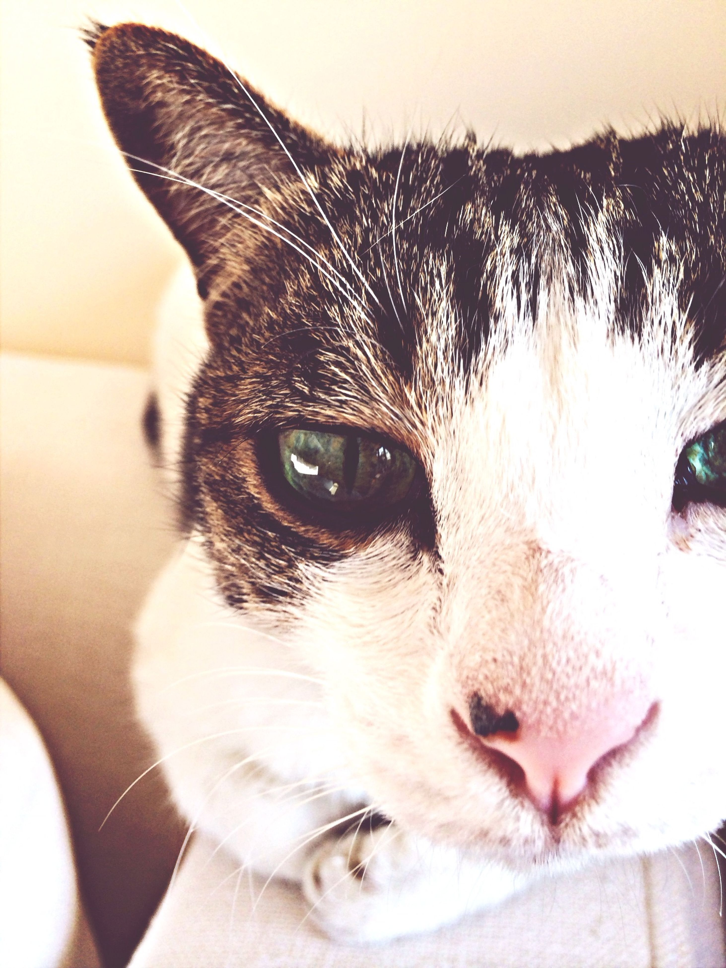 pets, domestic animals, one animal, animal themes, mammal, dog, indoors, close-up, domestic cat, animal head, looking at camera, portrait, animal body part, cat, part of, one person, whisker, home interior, focus on foreground