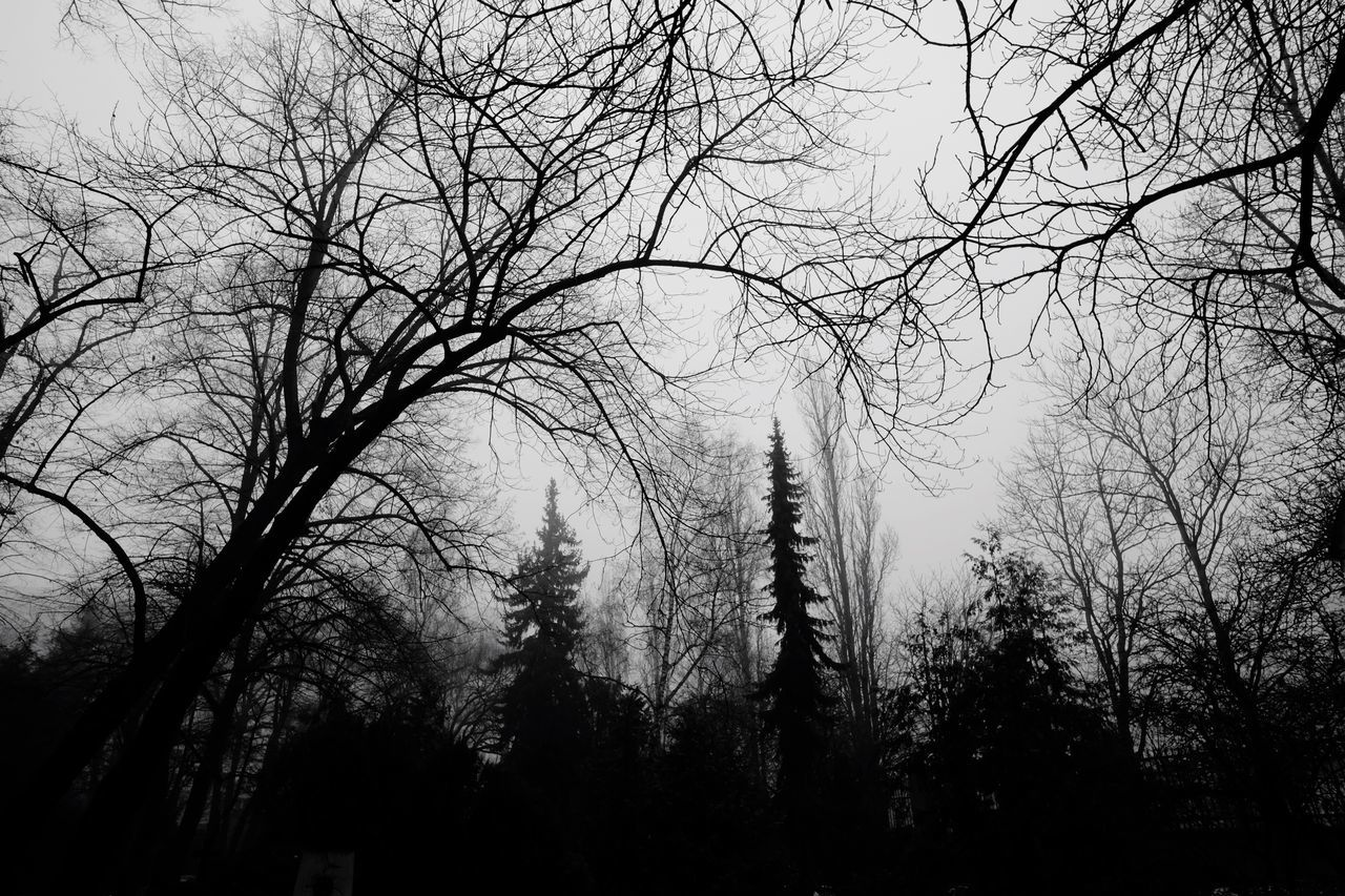 Low Angle View Branch Bare Tree Silhouette Foggy Morning Winter Trees Black And White Foliage