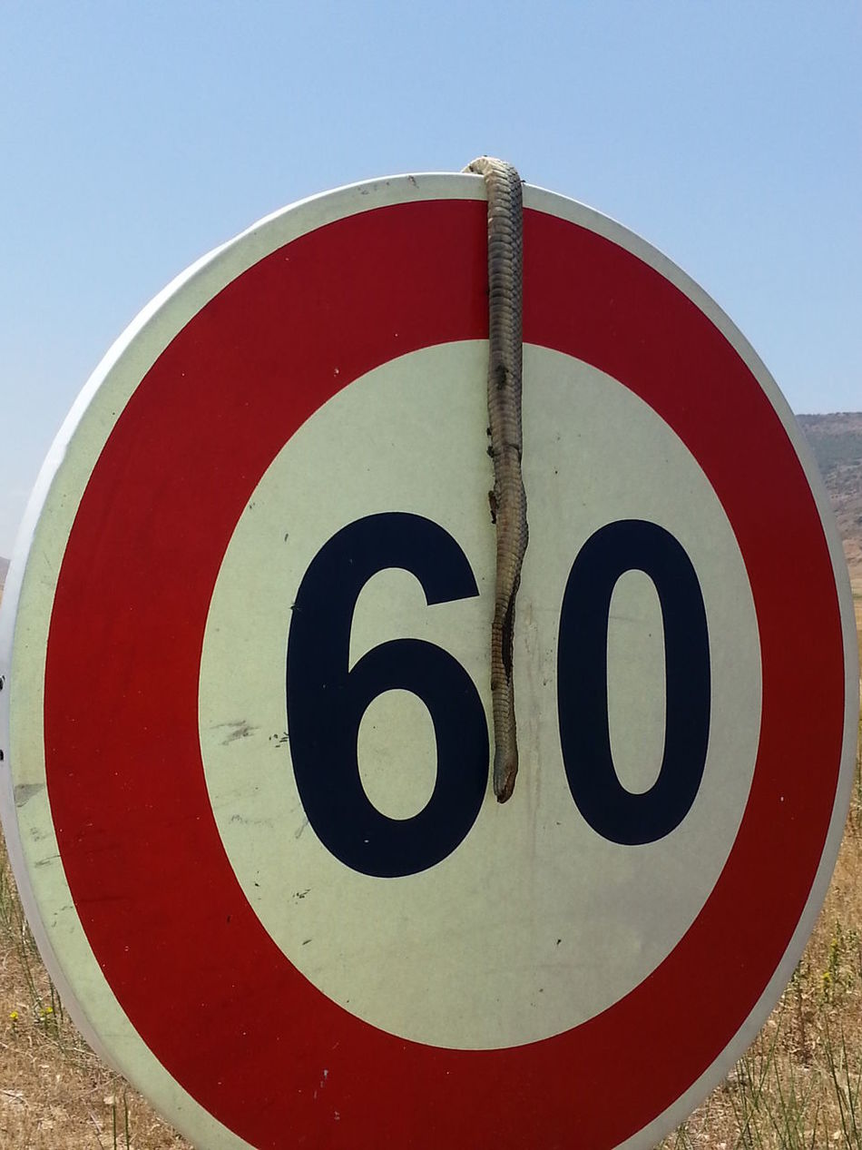 #baghzaf Circle Close-up Communication Cut And Paste Day No People Number Outdoors Red Road Sign Speed Limit Sign