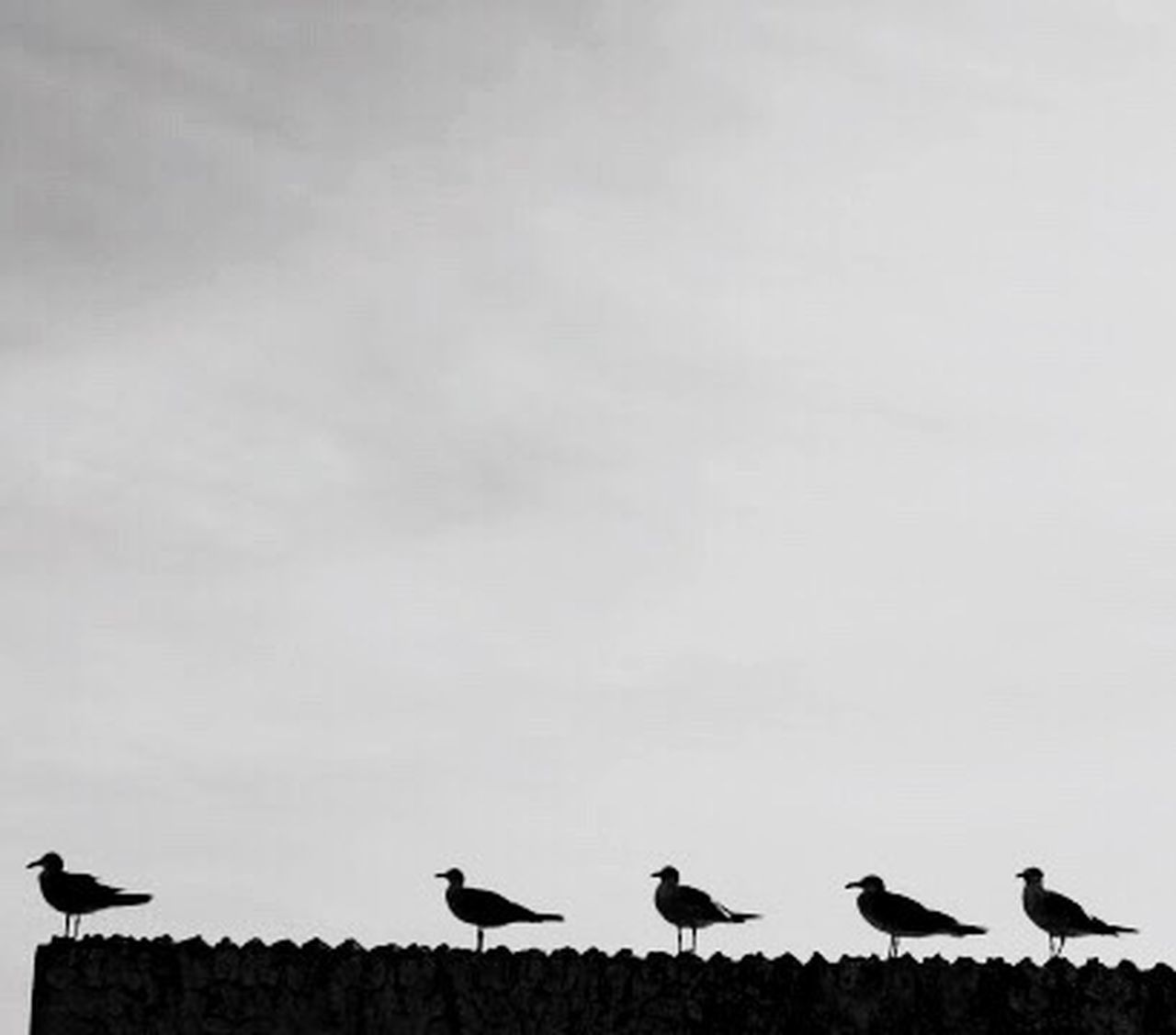 Birds Ready Flight Overlooking Groupie Blackandwhite Flightclub Bird Photography Monochrome Photography