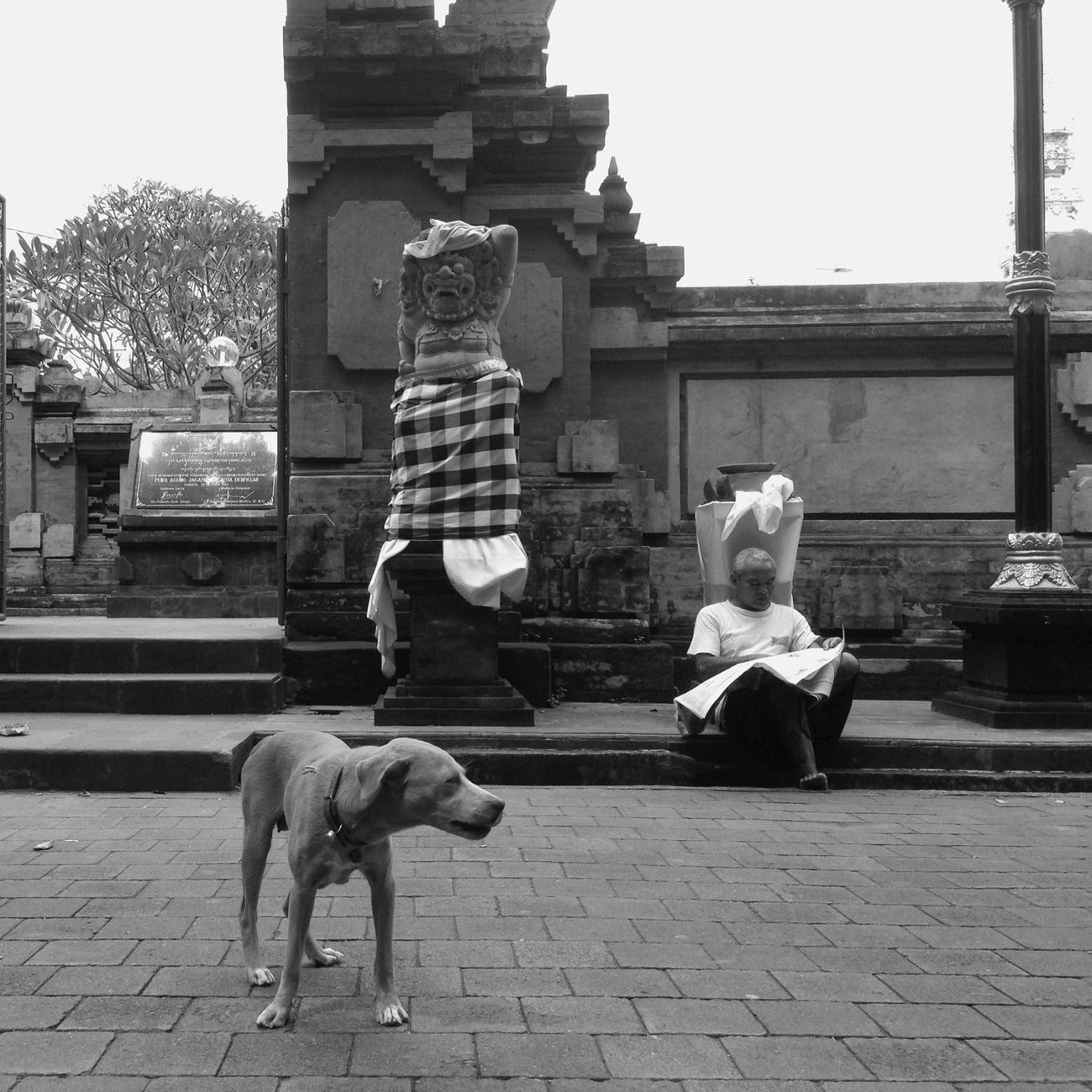 Street dogs roaming in front of Pura Jagatnatha, Bali Streetphotography Blackandwhite Iphonesia