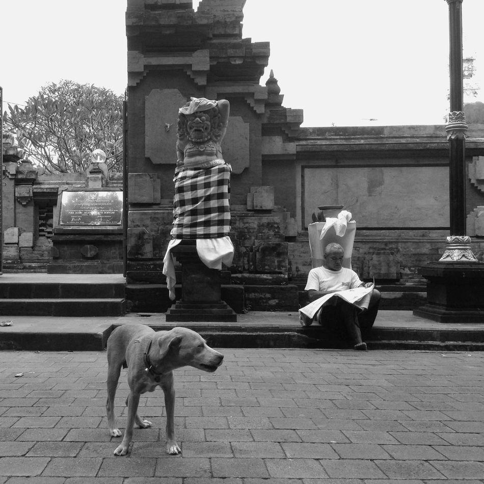 Street dogs roaming in front of Pura Jagatnatha, Bali Streetphotography Blackandwhite Iphonesia
