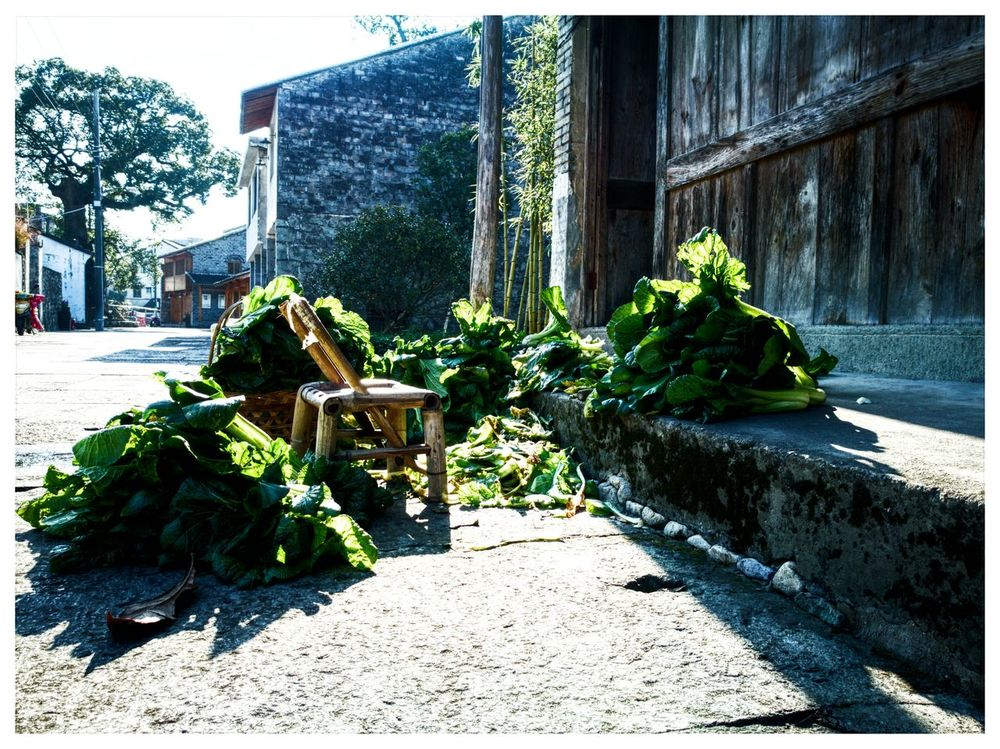 Plant Green Color Day No People Nature Street Streetphotography China Photos China Taizhou