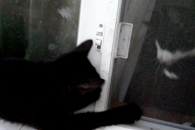 Pivotal Ideas Showcase: August @wolfzuachis 2016 Eyeem Market Showcase: 2016 EyeEm Wolfzuachis Animals Cats Window Net Window Sill Window Frame Windownet Window Net Window View Open Up  Openup Open The Window