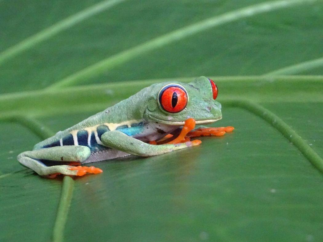 EyeEmNewHere Animal Wildlife Green Color Animal Themes Frog Sshh EyeEmNewHere