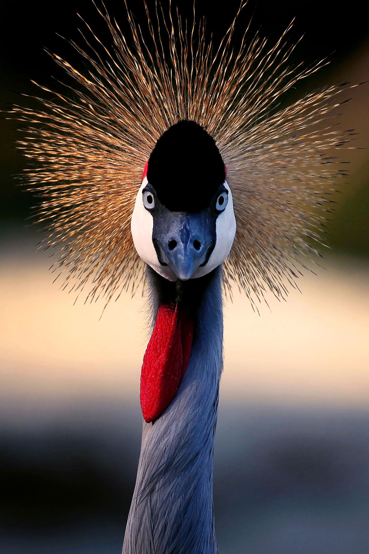 Beautiful stock photos of lustige tiere,  Animal Eye,  Animal Head,  Animal Neck,  Animal Themes