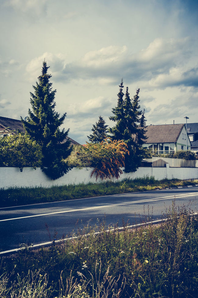 Conifers Architecture Beauty In Nature Built Structure City Cloud Cloud - Sky Cloudy Conifers Day Grass Growth Nature No People Outdoors Plant Residential Building Road Sky Staghorn Sumac Tree Weather