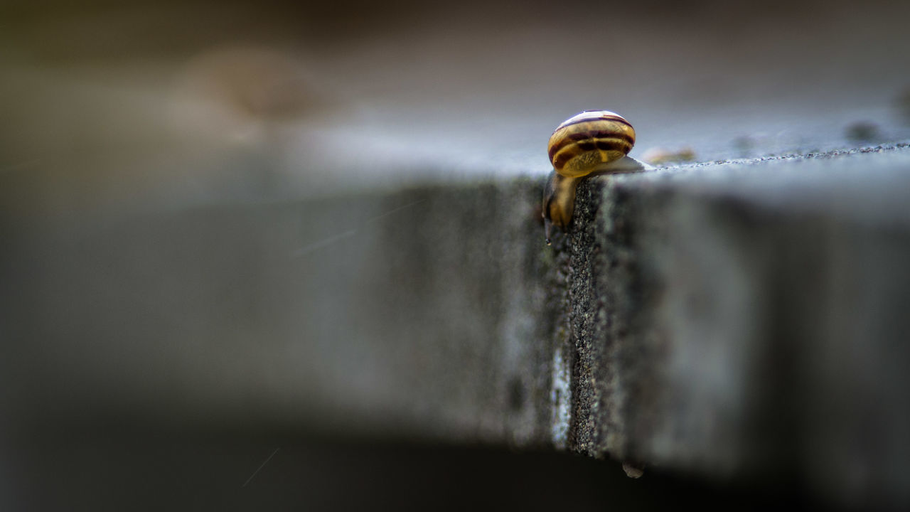 """""""Should I ?"""" Animal Themes Animals In The Wild Bokeh City Close-up Concrete Edge Of The World EyeEm Best Shots EyeEm Nature Lover Falling Life Nature In The City One Animal Outdoors Rain Rainy Selective Focus Snail Snail🐌 Tiny Urban Water Exploring Exploring New Ground The Great Outdoors - 2017 EyeEm Awards The Street Photographer - 2017 EyeEm Awards"""